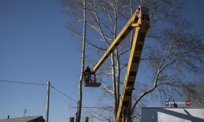 В городском округе продолжат кронирование деревьев