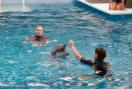 История дельфина 2 / Dolphin Tale 2