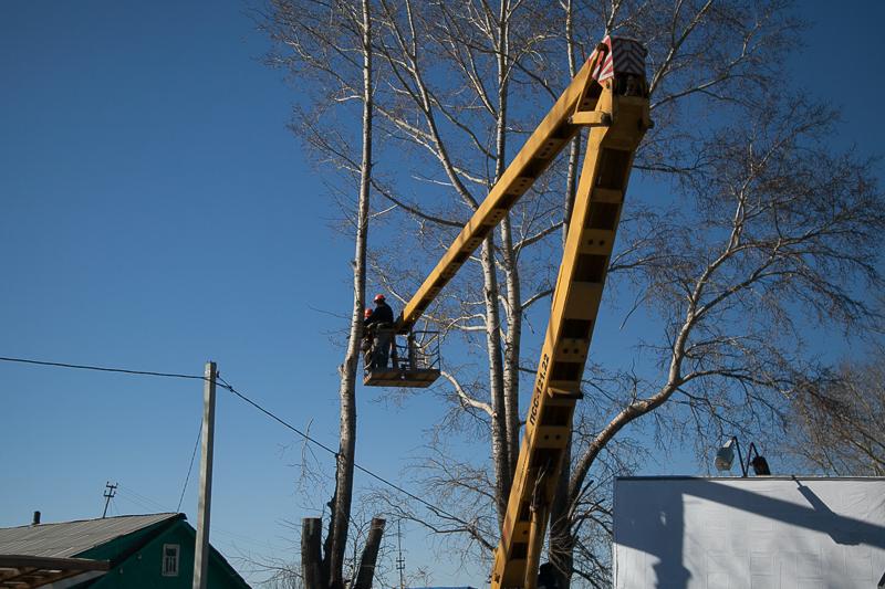 В этом году в Первоуральске будут кронированы 800 деревьев