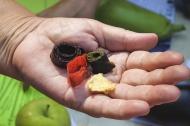 В Первоуральске состоялся «Праздник урожая»