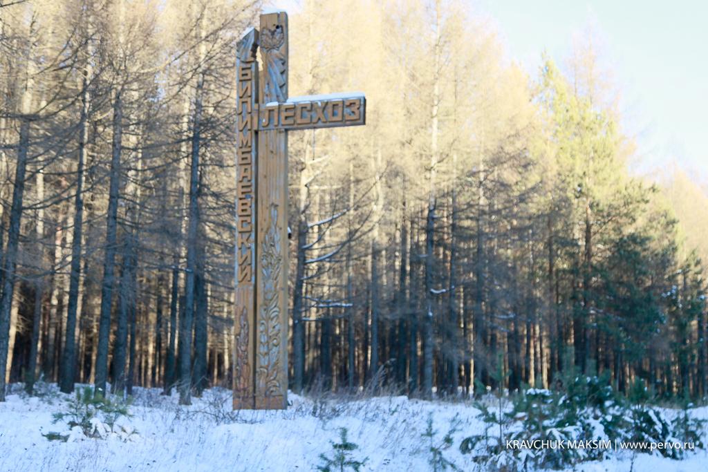 Определен порядок приобретения новогодних елей в лесничествах